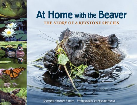At Home with the Beaver: The Story of a Keystone Species