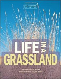 Cover image for Life in a Grassland book